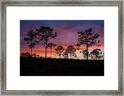 Framed Print featuring the photograph Sunset Pines by Paul Rebmann