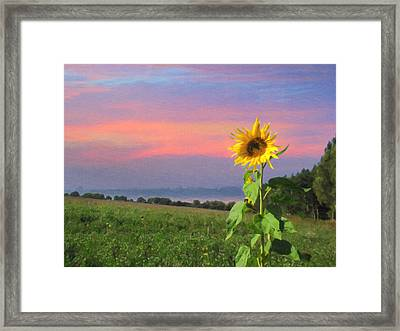 Sunset Pinksky Framed Print