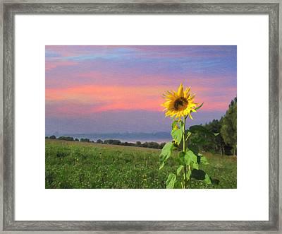 Sunset Pinksky Framed Print
