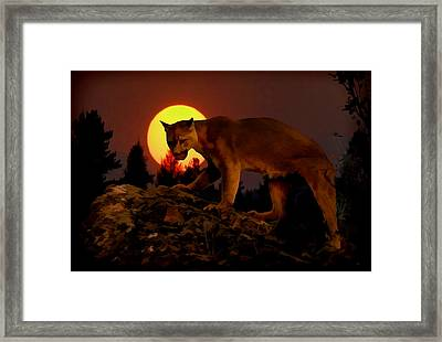 Sunset Predator Framed Print by Wade Aiken