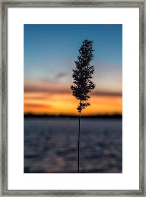 Sunset Reed Windward Beach Park Framed Print by Terry DeLuco