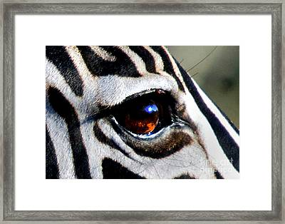 Sunset Reflected In Zebra's Eye    Framed Print