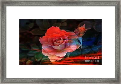 Sunset Rose Framed Print