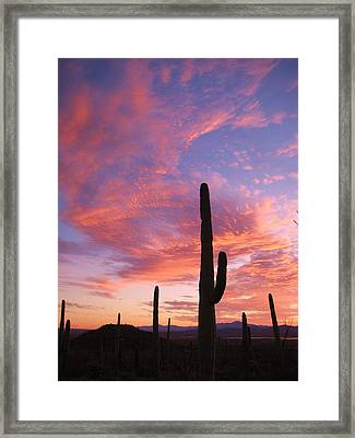 Sunset Saguaro Framed Print