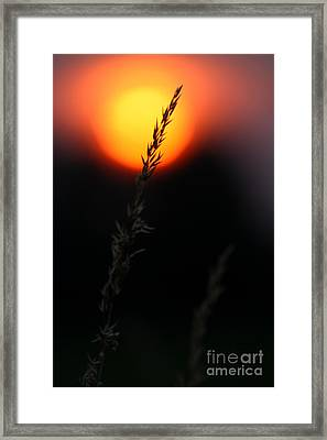 Sunset Seed Silhouette Framed Print