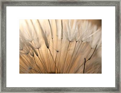 Sunset Seen Through A Dandelion Framed Print