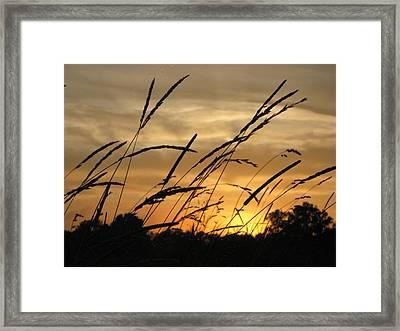 Sunset Sentinels Framed Print