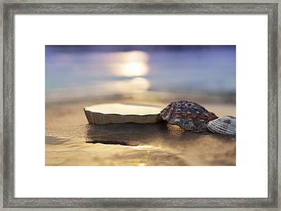 Sunset Shells Framed Print by Laura Fasulo