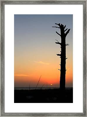 Sunset Silhouette Framed Print by Saya Studios