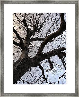 Sunset Skeleton Tree Framed Print by Michel Mata
