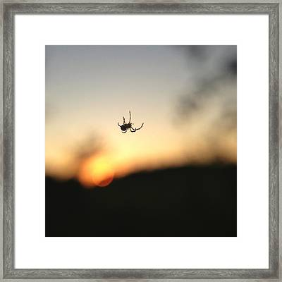 Framed Print featuring the photograph Sunset Spidey by Nikki McInnes