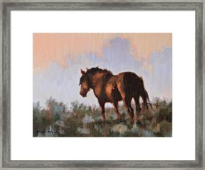Sunset Stallion Framed Print by Karen McLain
