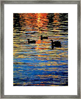 Sunset Swim Framed Print by Robyn King