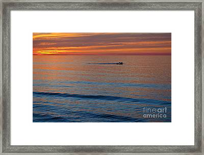 Framed Print featuring the photograph Sunset Swimmer by Maria Janicki