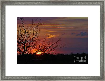 Sunset Through The Branches Framed Print