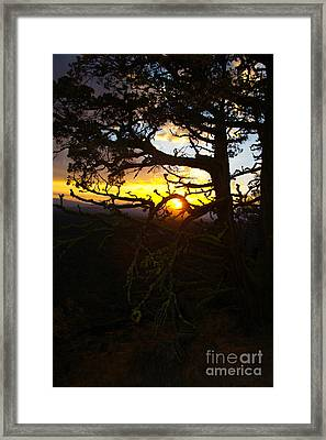 Sunset Through Branch Framed Print