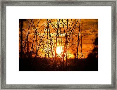 Sunset Through The Brush Framed Print