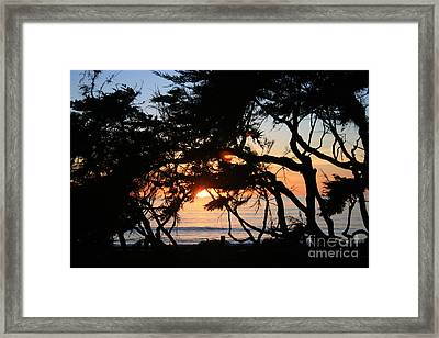 Sunset Through The Cypress Trees Cambria Framed Print by Ian Donley