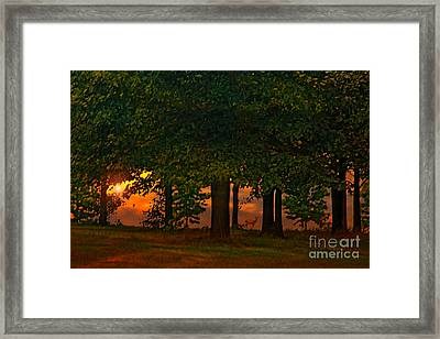 Sunset Through The Forest Framed Print