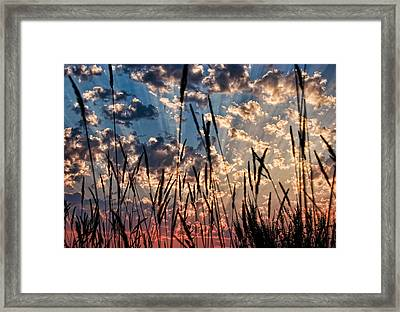 Framed Print featuring the photograph Sunset Through The Grasses by Don Schwartz