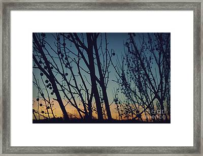 Sunset Through The Trees Framed Print by Jennifer Ramirez
