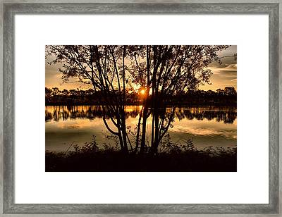 Sunset Through The Trees Framed Print by Patricia Strand