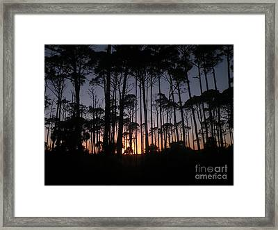 Sunset Thru The Pines II Framed Print by Lora Duguay