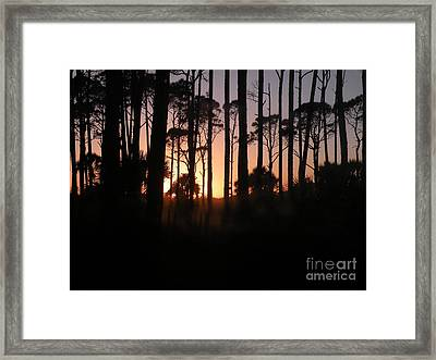 Sunset Thru The Pines IIi Port St Joseph Peninsula Framed Print by Lora Duguay