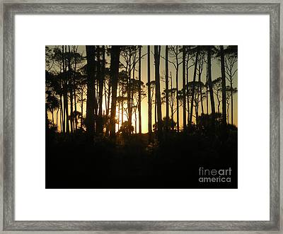 Sunset Thru The Pines Framed Print by Lora Duguay