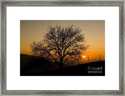 Sunset Tree Framed Print by Anne Gilbert