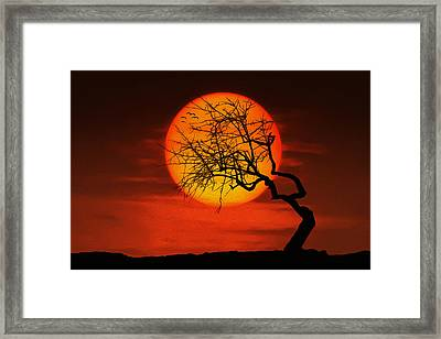Sunset Tree Framed Print by Bess Hamiti