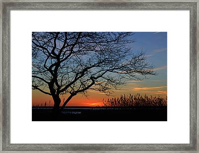 Sunset Tree In Ocean City Md Framed Print