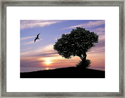 Sunset Tree Of Tranquility Framed Print