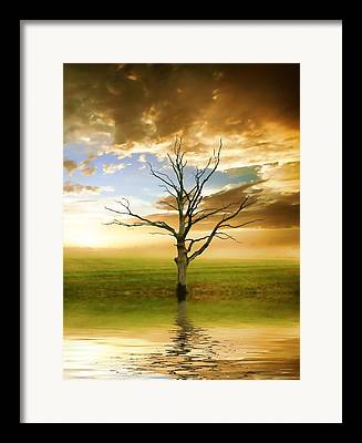 Lone Tree Mixed Media Framed Prints