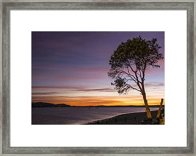Sunset Tree Silhouette Framed Print