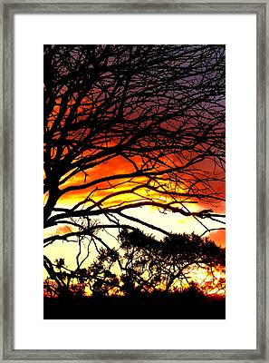 Sunset Tree Silhouette Framed Print by The Creative Minds Art and Photography