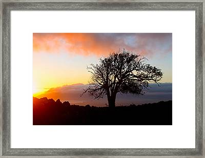 Sunset Tree In Maui Framed Print by Venetia Featherstone-Witty
