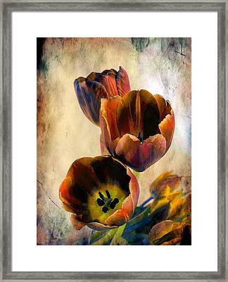 Sunset Tulips Framed Print