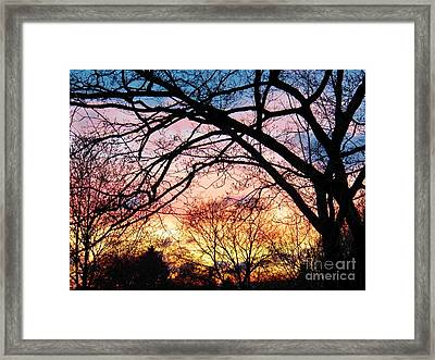 Sunset Under The Dogwoods Framed Print by Judy Via-Wolff
