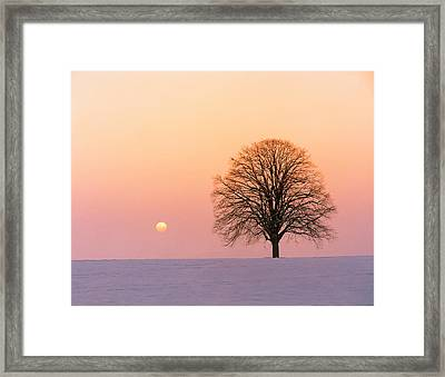 Sunset View Of Single Bare Tree Framed Print by Panoramic Images