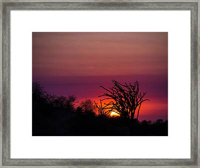 Sunset With Octopus Tree Framed Print by Alex Lapidus