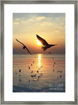 Sunset With Seagull Framed Print