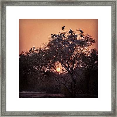 Sunset With Storks Framed Print