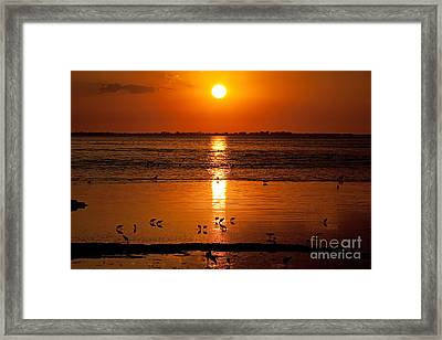 Framed Print featuring the photograph Sunset With The Birds Photo by Meg Rousher