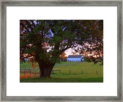 Sunset With Tree Framed Print by Joseph Skompski