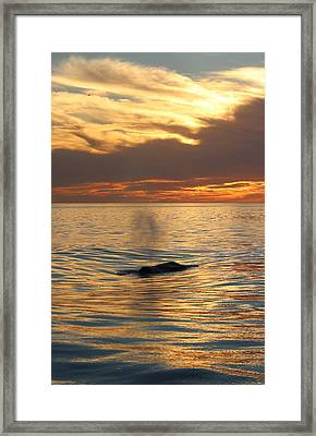 Sunset Wonder Framed Print