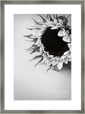 Sunshine 2 Framed Print by Eden Baed