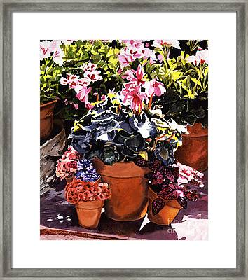 Sunshine And Flowerpots Framed Print by David Lloyd Glover