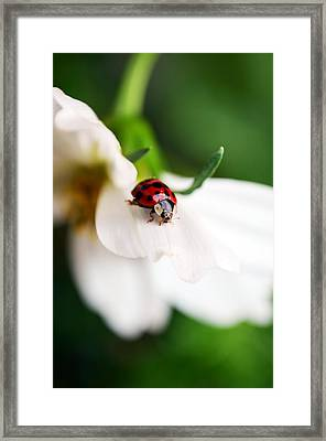 Sunshine And Petal Rest Framed Print by Lori Tambakis