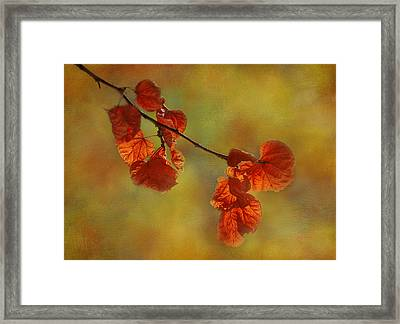 Sunshine And Red  Framed Print by Ivelina G